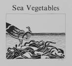 Sea Vegetables thumb