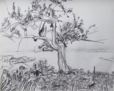 Study for Tree River Field thumb