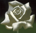 White Rose thumb