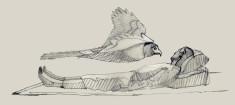 Hawk thumb