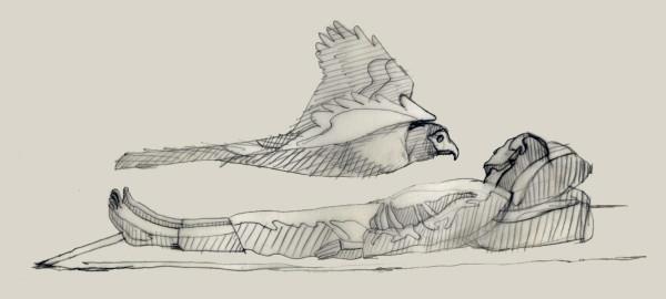Hawk large
