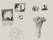 Studies for Food Poster thumb